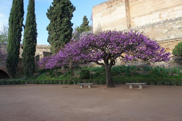 El Árbol del Amor de la Plaza de los Aljibes