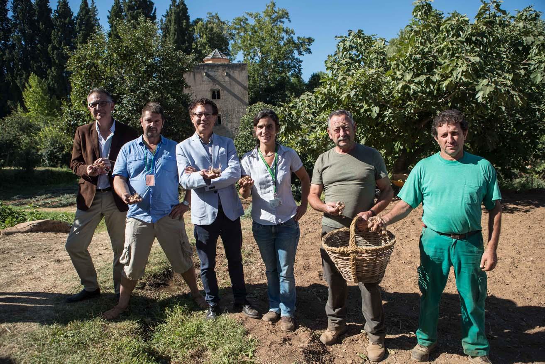 La Alhambra recupera el cultivo de azafrán en las Huertas medievales del Generalife