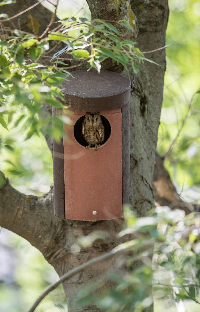 La Alhambra instala cajas-nido para que habiten autillos, el ave rapaz más pequeña de la Península.