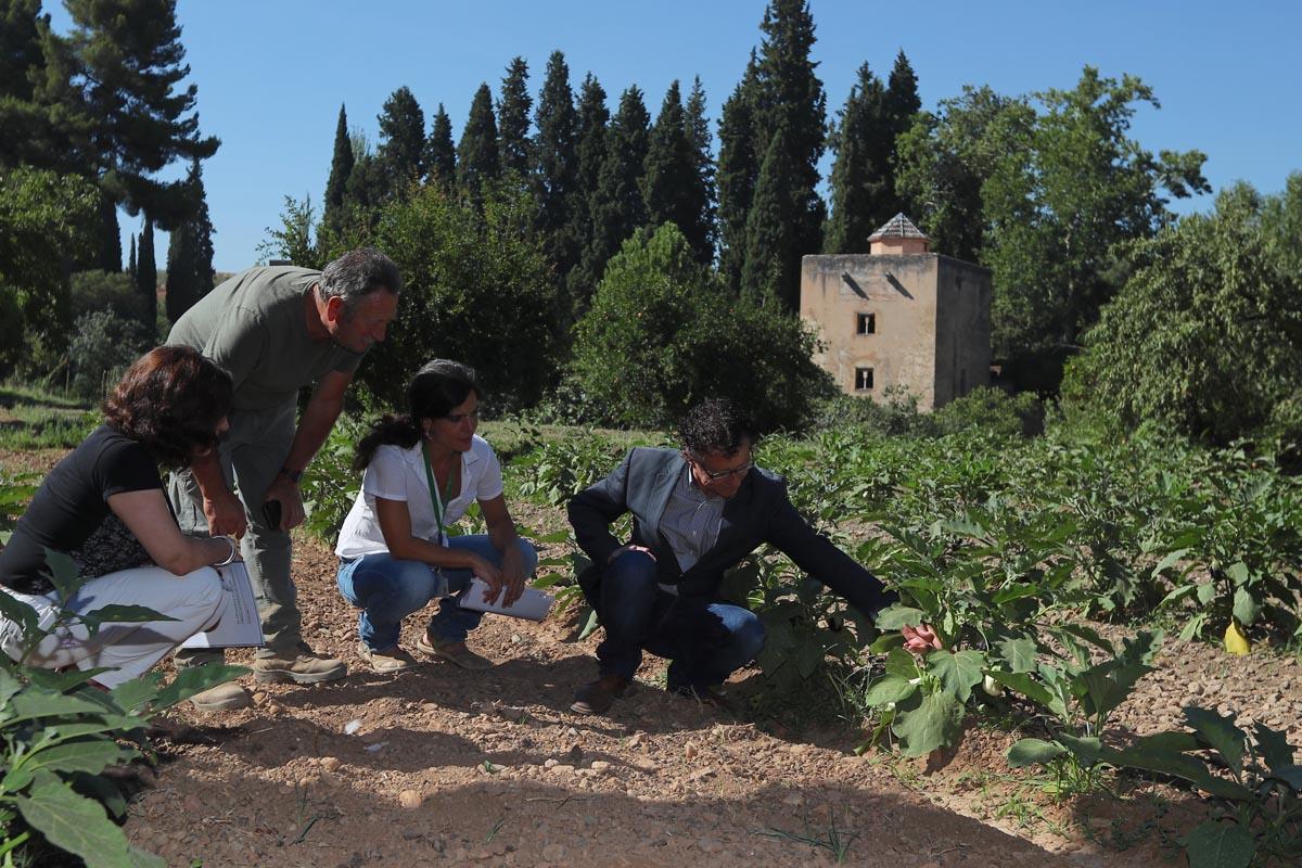 La Alhambra organiza visitas guiadas gratuitas y talleres didácticos en las Huertas Medievales del Generalife