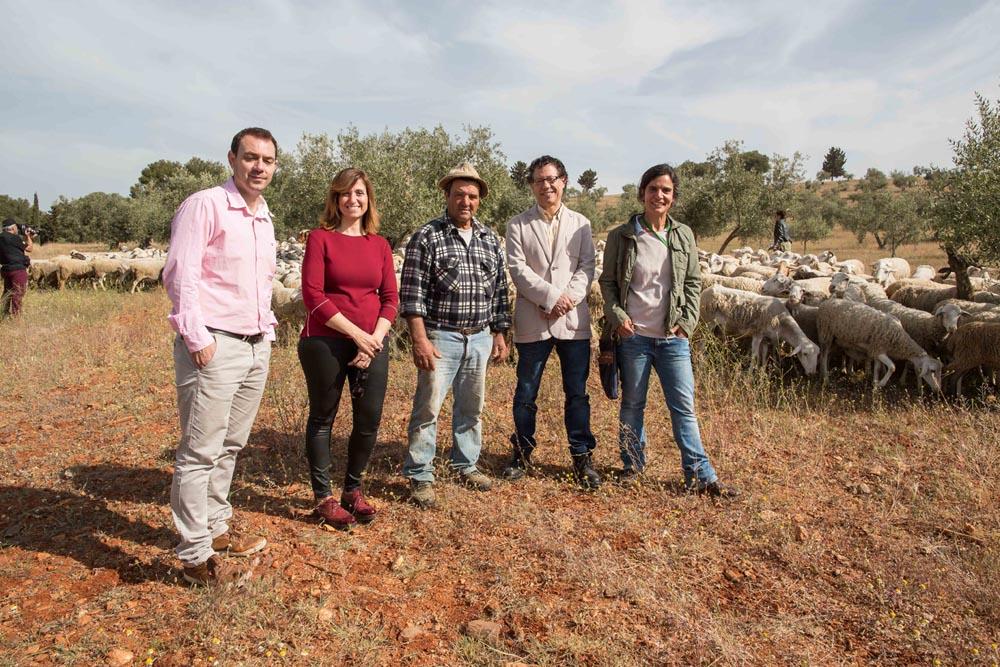 La Alhambra recupera el pastoreo en la zona del olivar de la Dehesa del Generalife