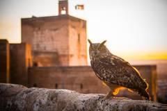 Animales 'salvajes' en el Bosque de la Alhambra