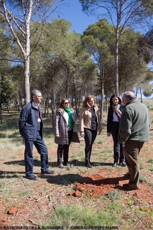 El proyecto de restauración forestal del Parque de la Dehesa del Generalife, en la recta final