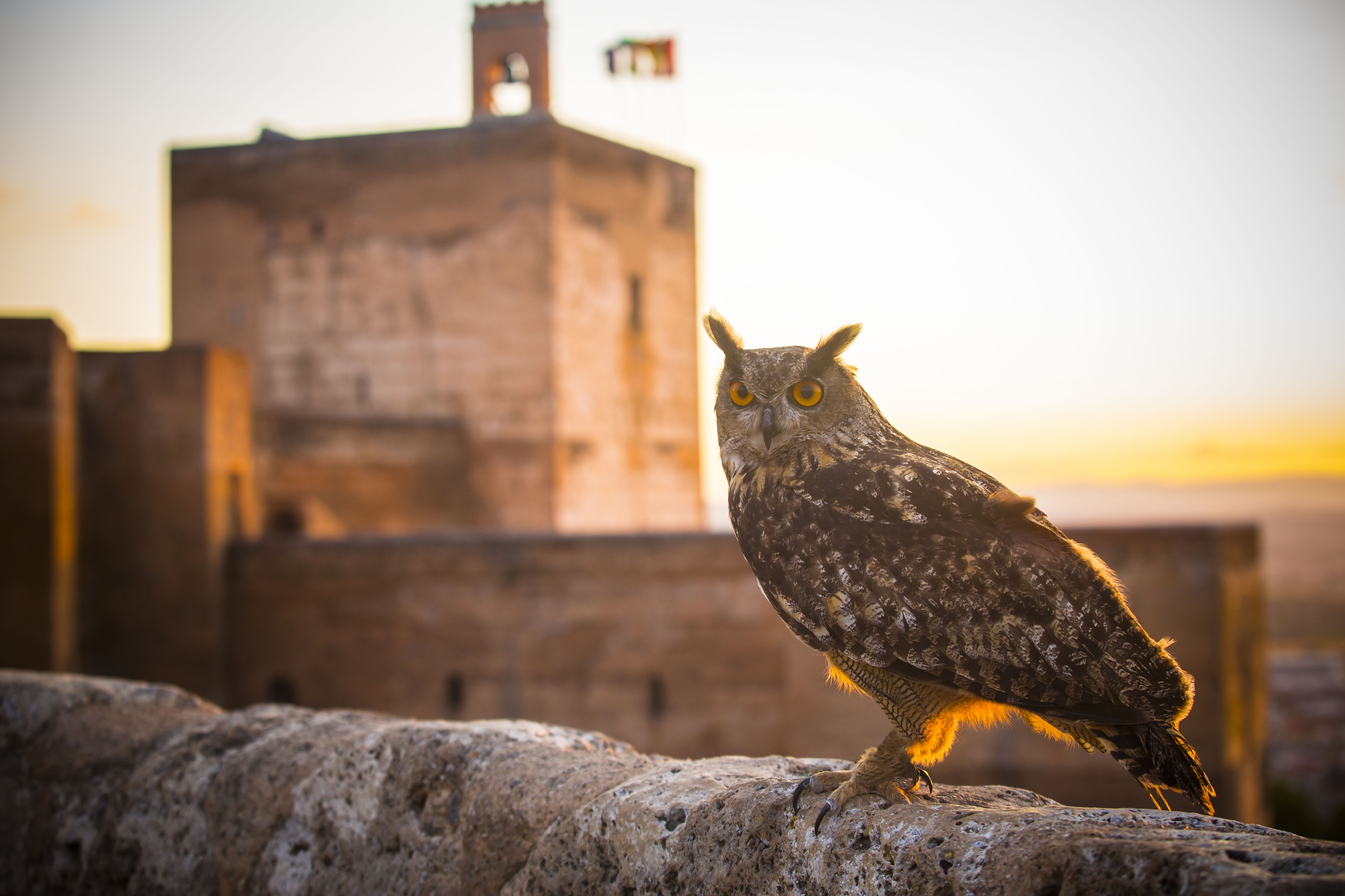 Las especies de fauna que habitan en la Alhambra verde