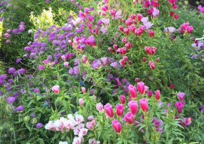 Flor de temporada en el Generalife