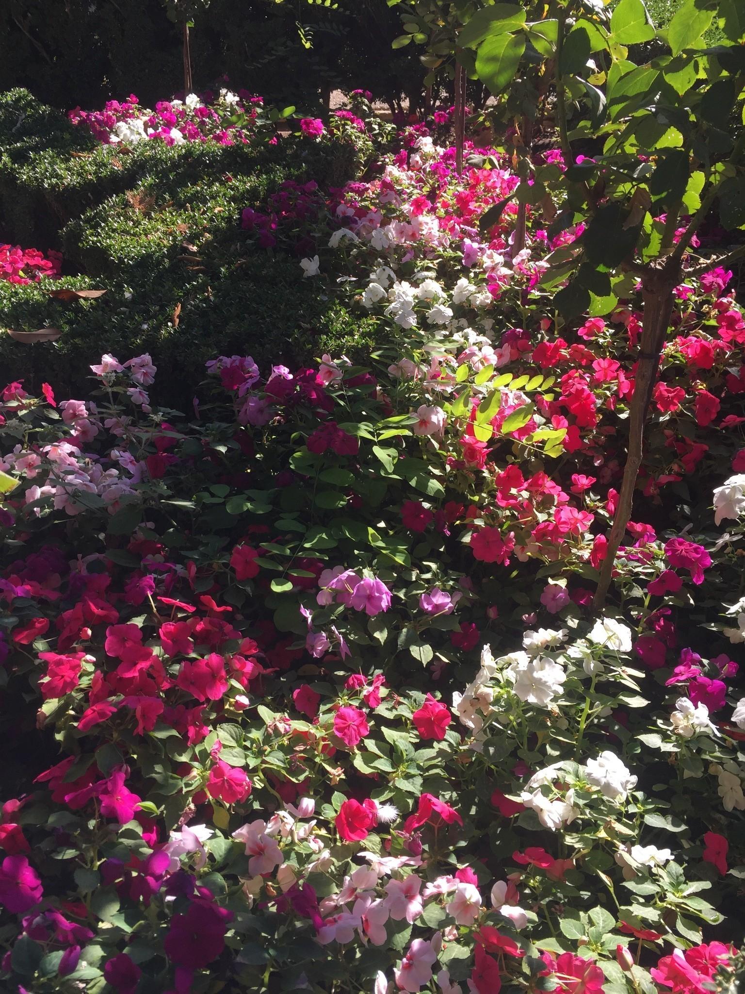 Flor de temporada en el Secano