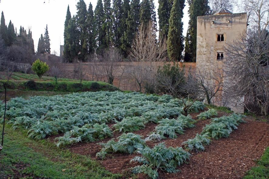المحاصيل الحالية من بساتين قصر الحمراء