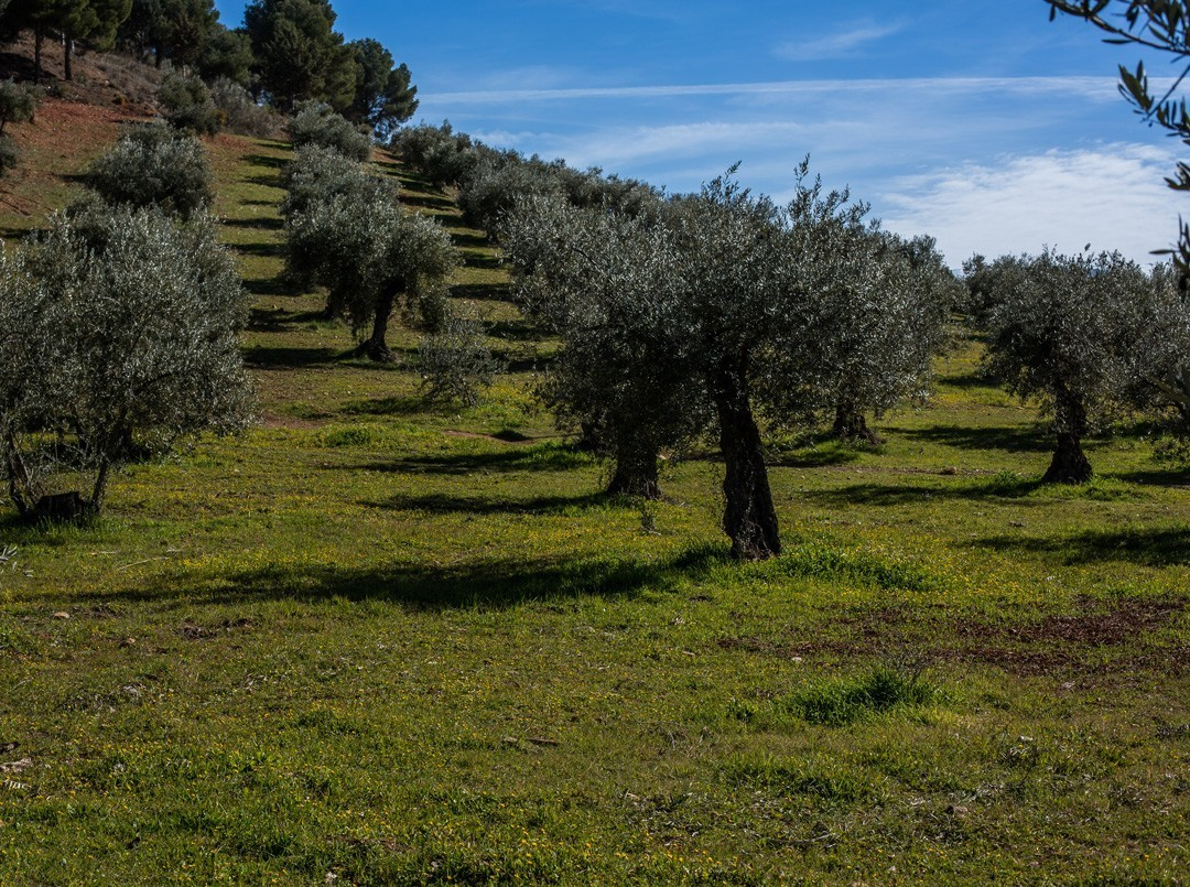 Generalife meadow