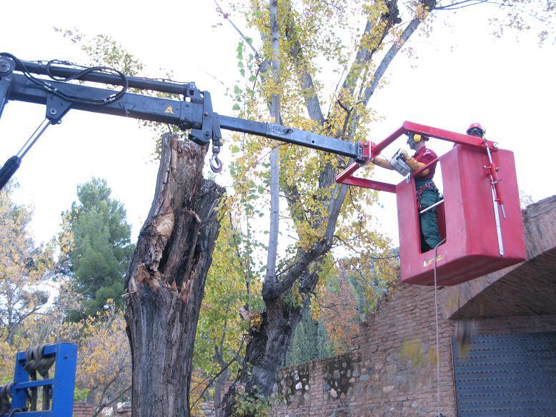 Patronato de la Alhambra y Generalife behind the restoration of woods and groves