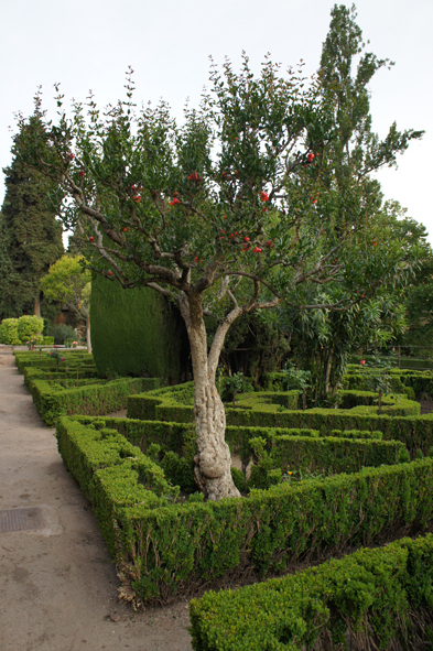 The pomegranate of the Gardens of the Partal