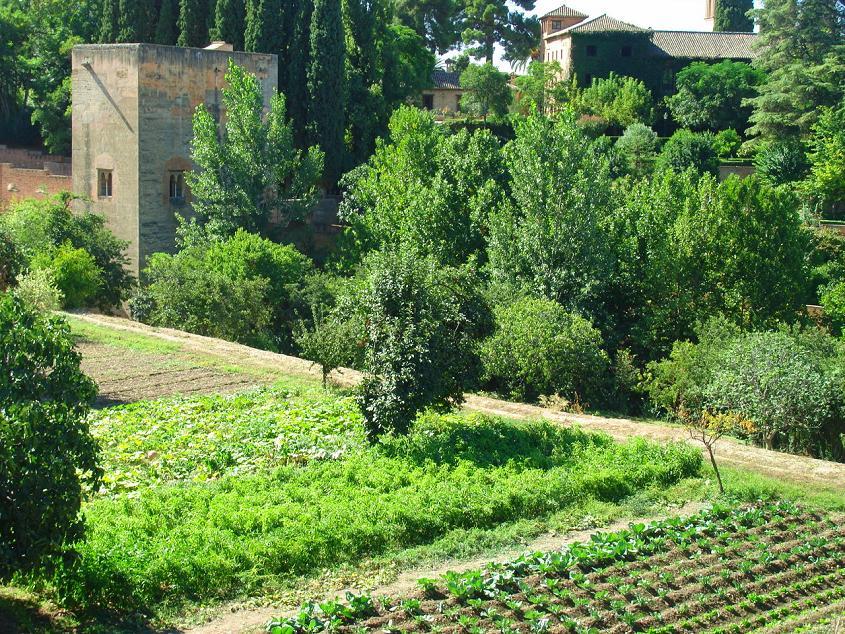 Did you know Andalusian crops are being grown in the Generalife gardens?