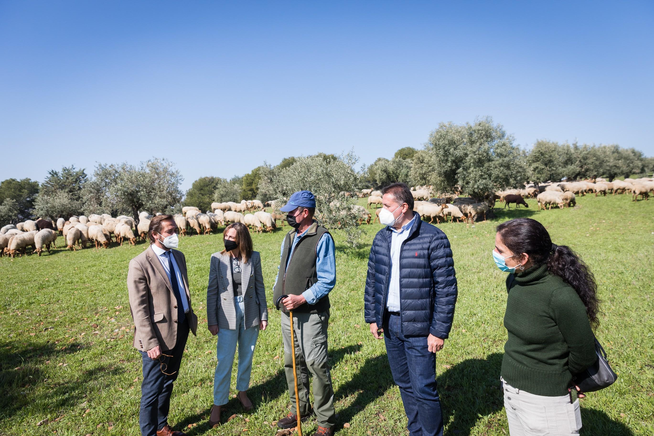 La Alhambra consolida la actividad del pastoreo en la Dehesa del Generalife